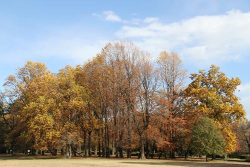 小金井公園の紅葉1