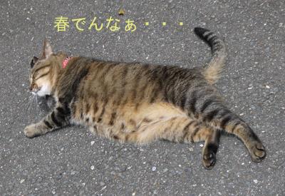 himao_01.jpg