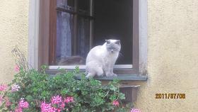 ローテンブルグのネコ