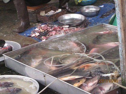 魚屋.jpg