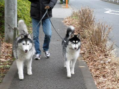 ポトフ&スフレはパパとお散歩