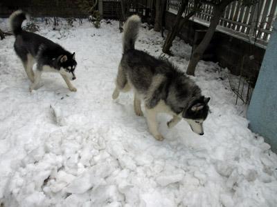 雪遊びするポトフ&スフレ