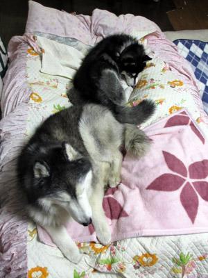 寝床のポトフ&スフレ