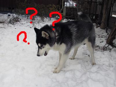 消えた雪玉を探すスフレ