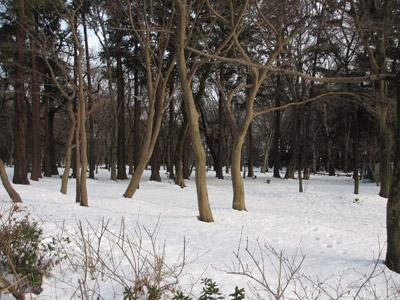 雪の残る井の頭公園