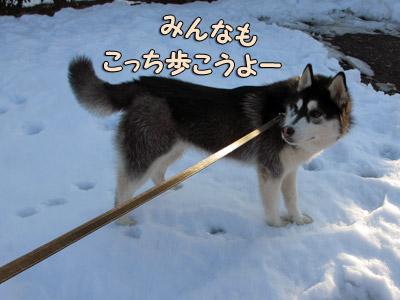 雪大好きスフレ