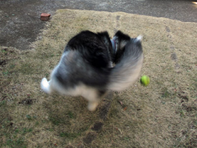 お庭でボール遊び