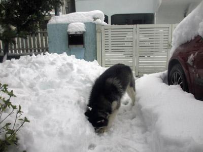 今朝の積雪具合