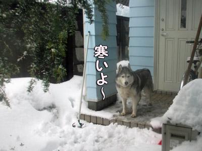 玄関先の寒がりトリュフ
