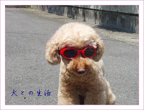 あんずのサングラス