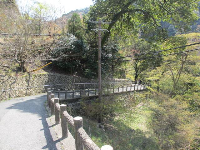 箕面滝2013春-5