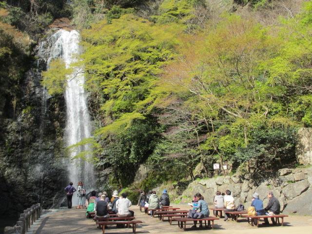 箕面滝2013春-12