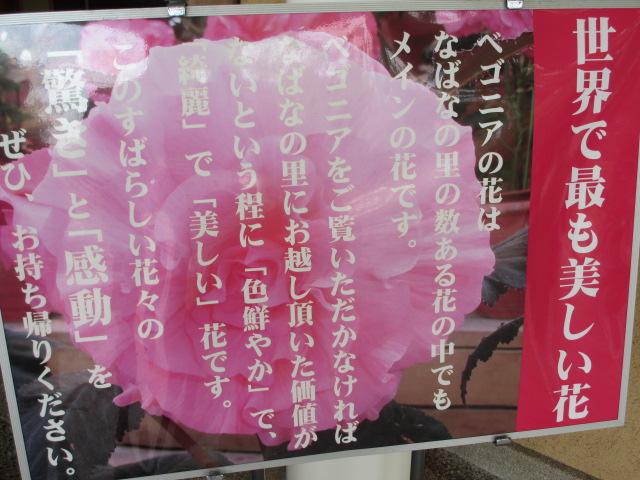 なばなの里2013-13