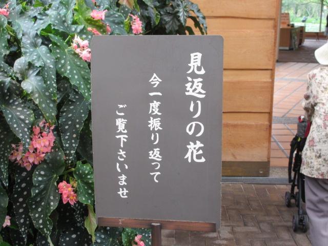 なばなの里2013-39