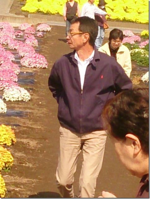 小菊の里、開花状況 (H26/10/24)
