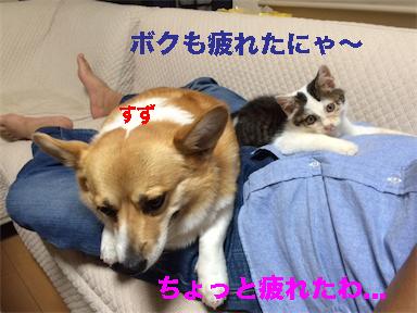 11_201410141430028b0.jpg