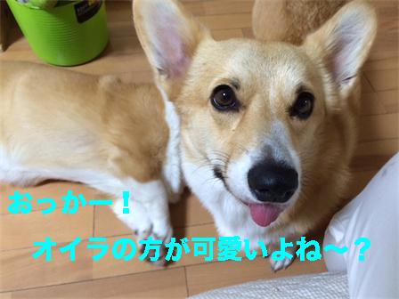 201410111031450be.jpg