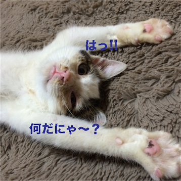 201410121440037f7.png