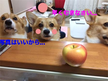 20141027091617064.jpg