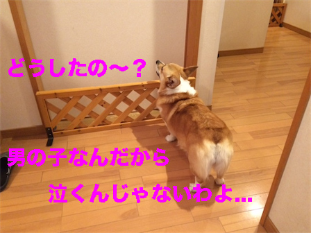 4_20141009122939de5.jpg