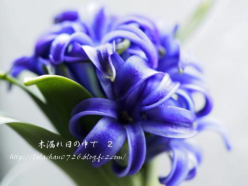 20140206225000db5.jpg