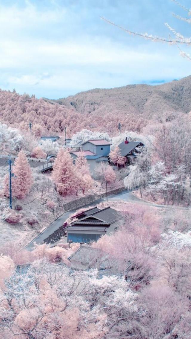 sakura_snow_sky.jpg