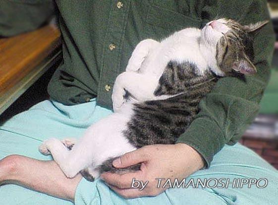 仰向けに寝るネコ