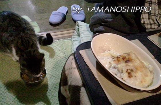 人と並んでご飯を食べる猫