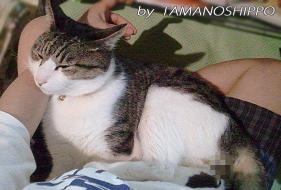 ひざの上で寝るネコ