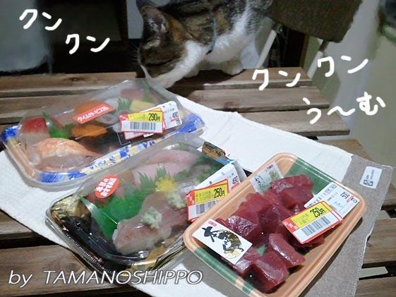 お寿司をクンクンする猫