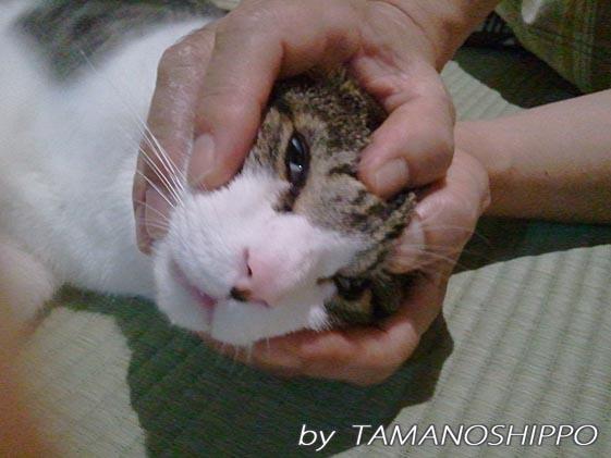 フェイスマッサージ中の猫
