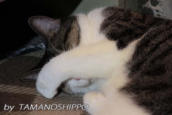 目を隠す猫