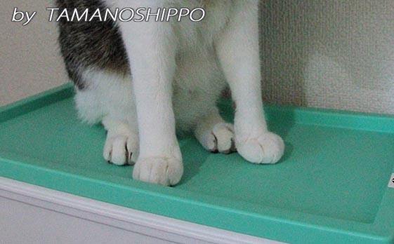 いたずら猫の足元