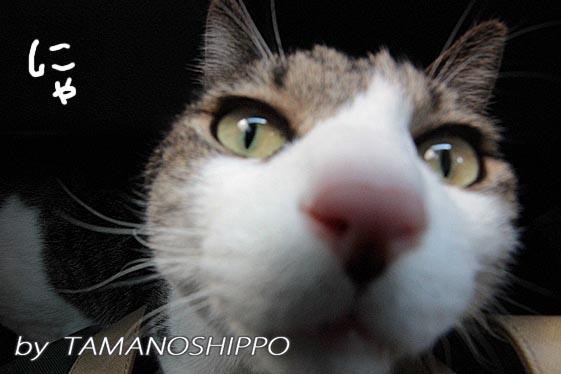 猫の変な顔