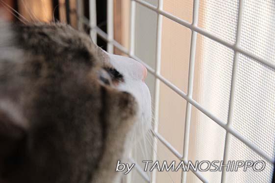 お外を見る猫