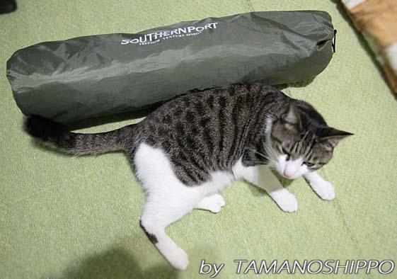 テントの大きさ(サンシェード)