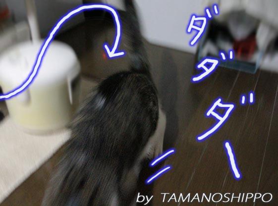 逃げる猫(ちび)