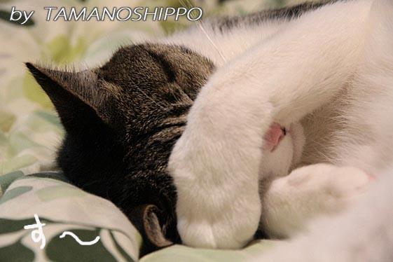 熟睡中の猫