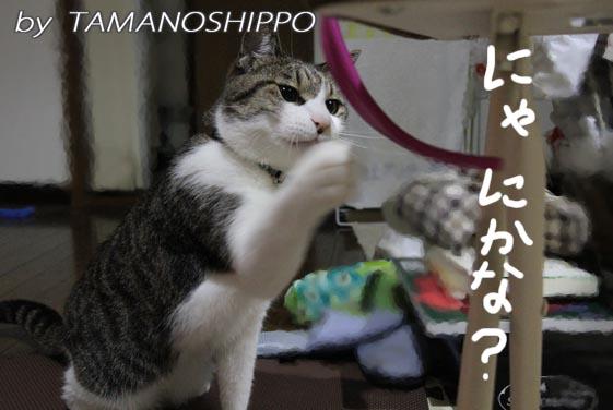 チューブをおもちゃにする猫