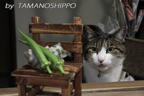 オクラを見る猫