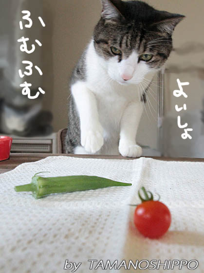 イタズラ猫と収穫野菜