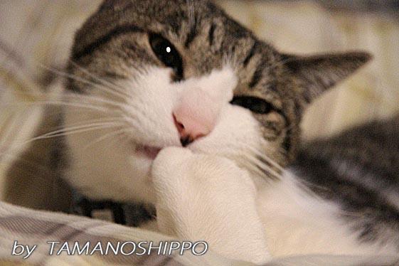 満足する猫5211