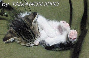 ひざの上で寝る子猫0158