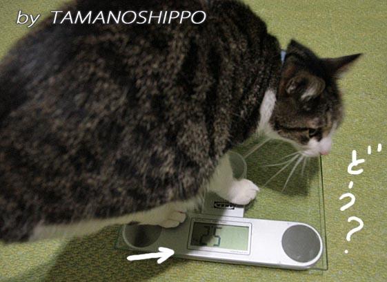 猫の体重測定4687