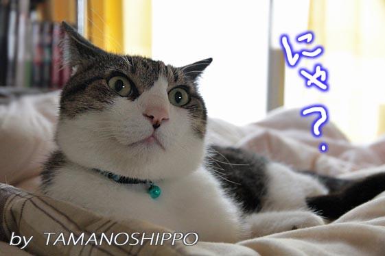 音にびっくりする猫6651