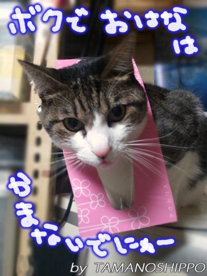 ちり紙に変身猫20110114