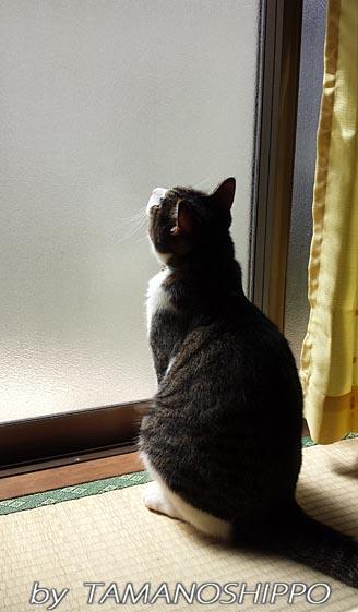 お外は雨・・・20130915