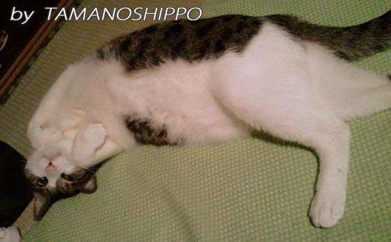 座布団を奪った猫20130825