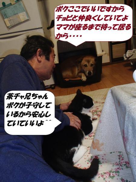 PC040010_convert_20141204144416.jpg