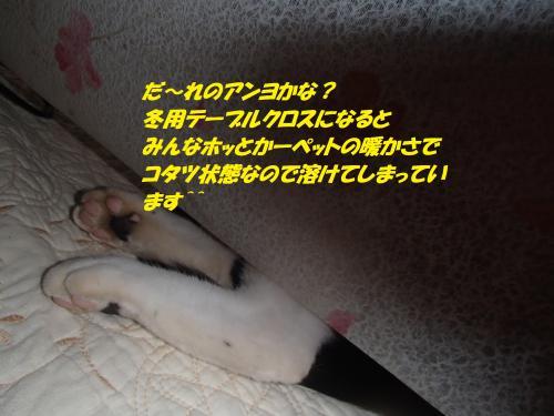 PC080066_convert_20141210122728.jpg